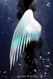 翼の標本 No.5