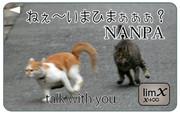 ナンパプラチナカード