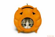 蚊取りにゃん香 -Halloween version-
