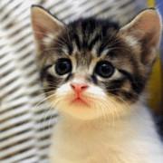 再生を押すと涙を流す仔猫