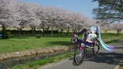 アペちゃんのお花見サイクリングッ!