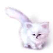 ☆ ペルシャ猫の子猫