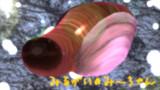 ミル貝のみーちゃん