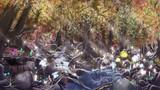 妖精の森(秋)