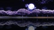 【MMDステージ配布】夜桜 V5【スカイドーム】