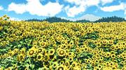 【MMDステージ配布】ひまわり畑 KK1【スカイドーム】