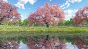 【MMDステージ配布】桜の公園 NN8【スカイドーム】