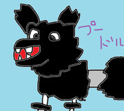 プードル犬