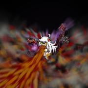 業火を噴出する北方棲姫