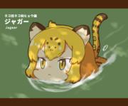 ジャガーはネコ科では珍しく、泳げるんだ