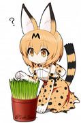 猫草とサーバル