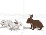 「兎」と「ニホンノウサギ」について。