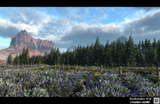 Coniferous Forest Field