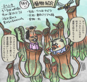 勝手に植物紹介~ウツボカズラ