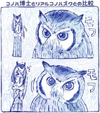 自分の描くコノハ博士とリアルコノハズクの比較