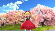 桜満開の湖とメディスン