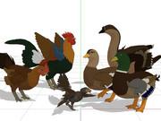 鳥類モデルの雨覆い羽の形状を改修いたしました。