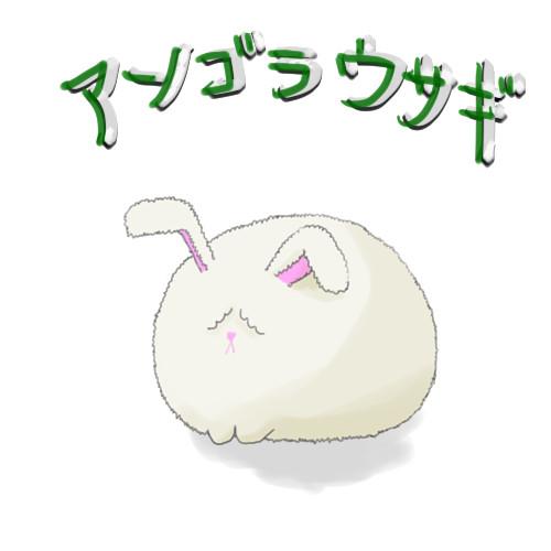 アンゴラウサギの画像 p1_15