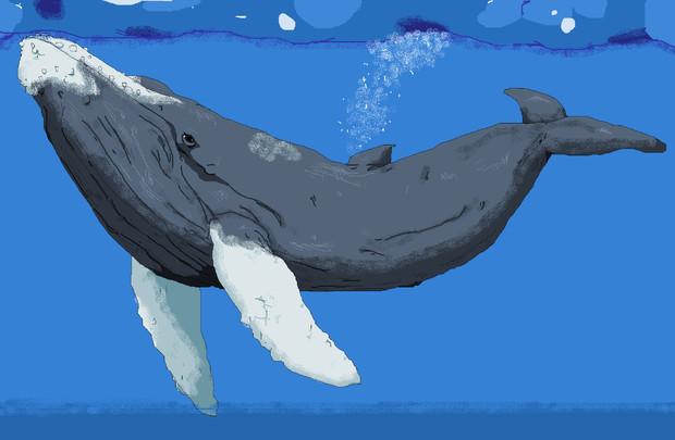 ザトウクジラの画像 p1_20