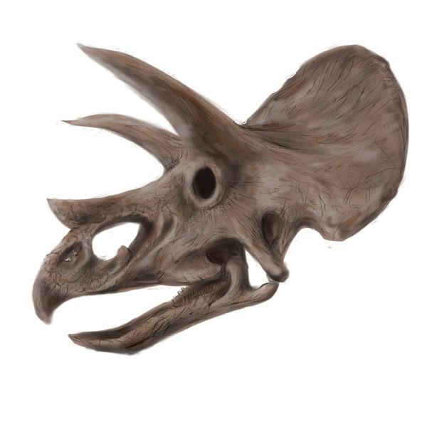 トリケラトプスの画像 p1_30