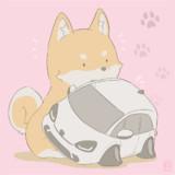柴犬×フィット4