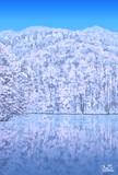 冬の曲沢沼