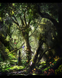 獣たちの森