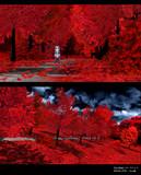 【MMDステージ配布】赤い森ステージ