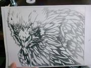 猛禽類 鷹