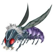 シャッガイからの昆虫