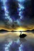 夕影と白鳥