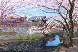 桜の白雲橋/八幡堀(近江八幡)