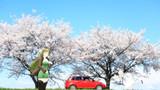 【Fate/MMD】春のドライブ