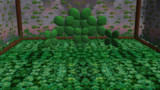 Four Leaf Clover Stage