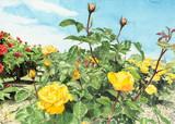 薔薇「ゴールドマリー´84」