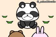 野良パンダと遭遇【あにまるびすけっと】