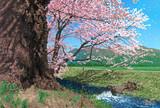 観音寺川の桜(福島県猪苗代)