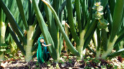 ちっちゃいミクのネギネギ畑で捕まえて。