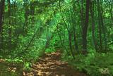 新緑の輝き(五色沼探勝路)