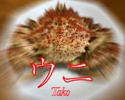 ウニ(タコ)
