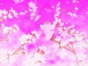 御伽桜(おとぎざくら)