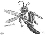 オオベッコウバチ