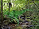 密林に潜む幻惑の捕食者
