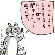 猫の性感帯、ヨシ!