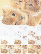 双子ライオン(生後1ヶ月)