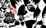 「紫陽花」※写真加工・版画効果・おむ08987