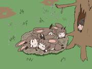 ちびジャカロの巣