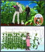 【MMD】とうもろこし畑セット