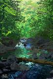 深緑の小野川不動滝 麓の渓流