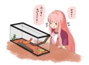 エビフライを飼育する茜ちゃん